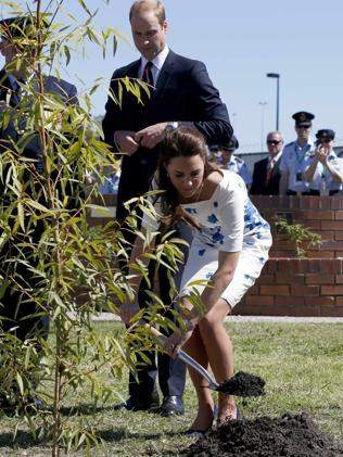 Remembrance ... Kate Middleton plants a tree with her husband Prince William, Duke of Cambridge at the RAAF Amberley airbase. Picture: Phil Noble