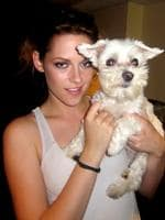 <p>Kristen Stewart holds Lucky Diamond, the fifteen-year-old Maltese terrier dog who the Guinness Book of World Records credited was 'the animal photographed with the most famous people', died at her home in New York on 05/06/2012 of spleen cancer. For over a decade, Lucky, and her owner Wendy Diamond, publicized the importance of adopting homeless animals and taking good care of them.</p>