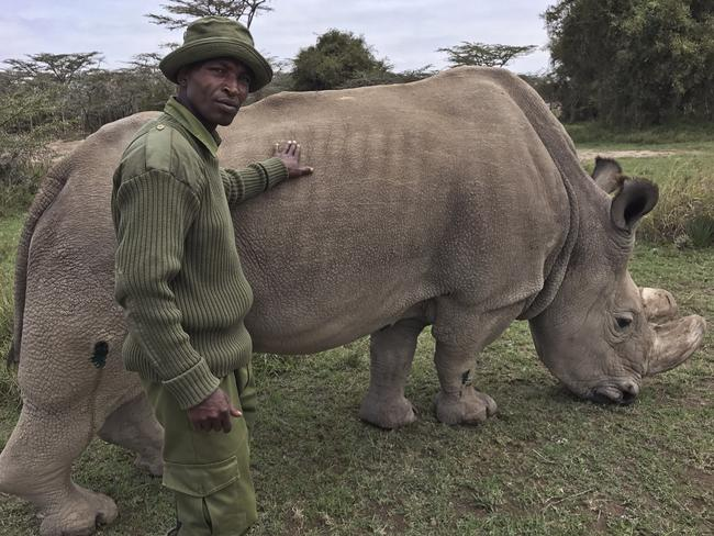 Wildlife ranger Zachariah Mutai poses for a photo with Sudan. Picture: AP/Joe Mwihia