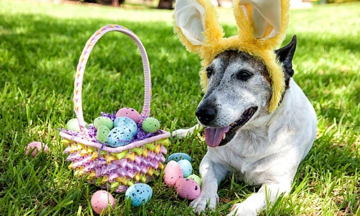 Australia's largest ever Easter hunt is on... For dogs!