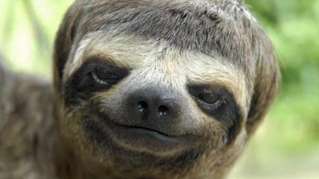 This sloth looks like he's fresh out of the barbers and ready for a night on the tiles — and he looks pretty pleased with himself. Picture: Reddit