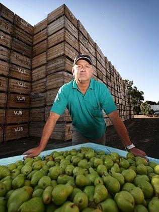 Pear grower John Dimitropoulos says he faces a bleak future. He hates the idea of wasting his 100-year-old trees. Picture: No...