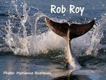 Rob Roy dolphin Picture: Marianna Boorman