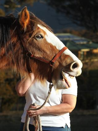 Karen Hood rescues Clydesdales through her charity Picture: Gary Ramage