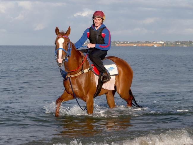 Single Gaze enjoys a walk at Moridialloc Beach last year. Picture: David Geraghty