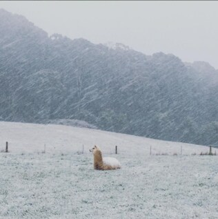 @joshuacooper88 A lovely, snowy morning in the Macedon Ranges. Spring is almost here! #Australia