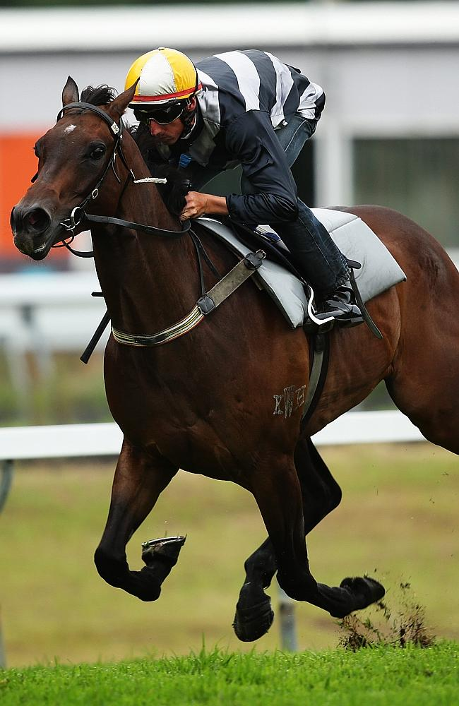 Group 1-winning mare Red Tracer is firing ahead of her return to racing. Picture: Brett Costello