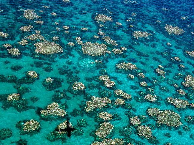 """Coral has been bleached for two consecutive years by warming sea temperatures on Australia's Great Barrier Reef with """"zero prospect"""" of recovery, scientists said on April 10, 2017. Picture: AFP."""