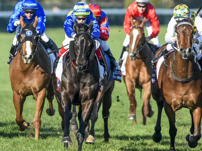David Hayes says Gregers is bound for the Flemington carnival and will be set for either the Myer Classic or the VRC Sprint Classic.