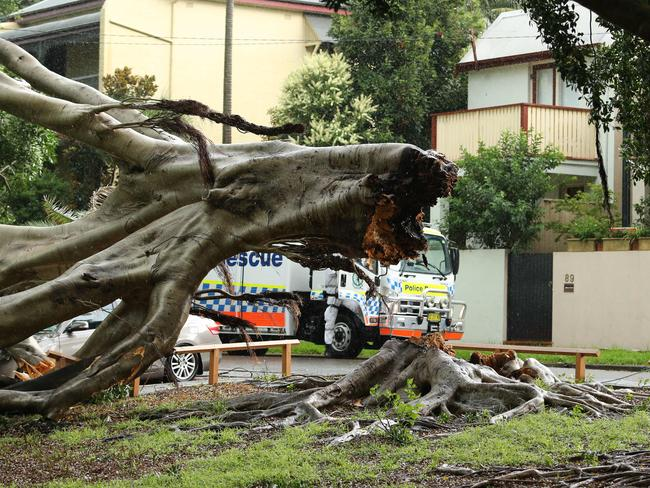 A fallen tree in Rozelle. Picture: Rohan Kelly