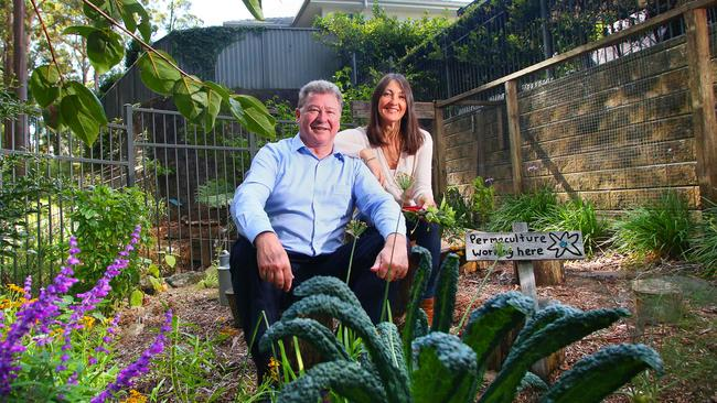 A Sydney home with frogs, owls and an succulent garden