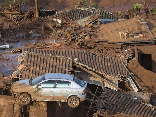 In this November 2015 photo, a car and two dogs are seen on the roof of destroyed houses at the small town of Bento Rodrigues.
