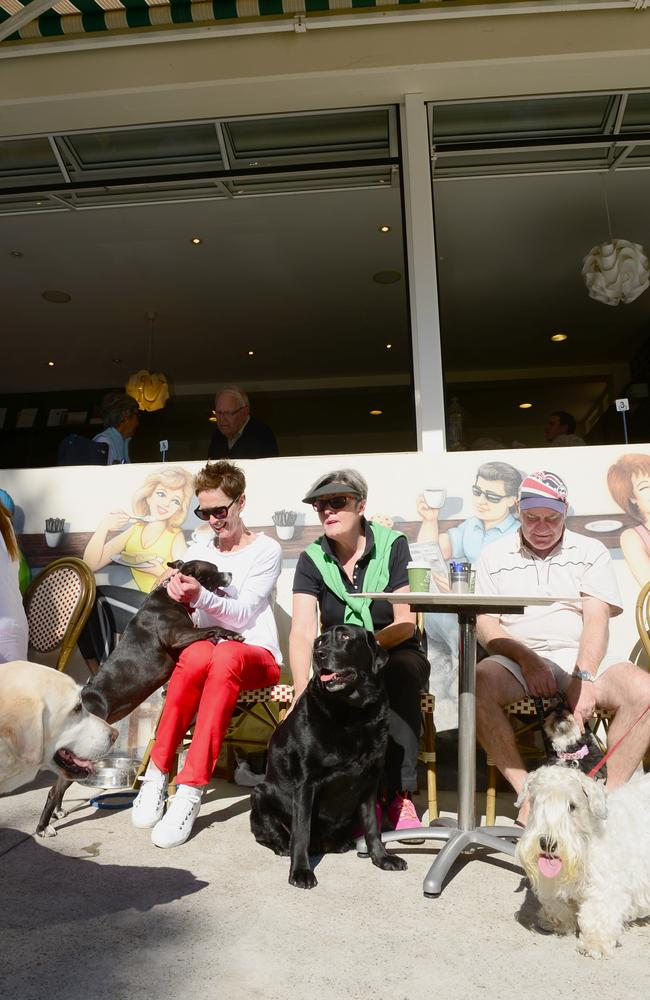 Furry friends gather at Forty Beans Cafe at Balgowlah. Picture: Jeremy Piper
