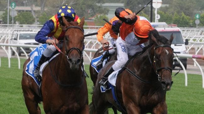 Exciting sprinter Nature Strip, left, is on track for a crack at the Oakleigh Plate after his win in the Inglis Dash at Flemington on Saturday.