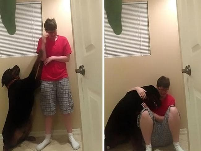 Scenes from the viral video of Kayden Clarke being comforted by Samson the rottweiler during an Asperger's 'meltdown'.