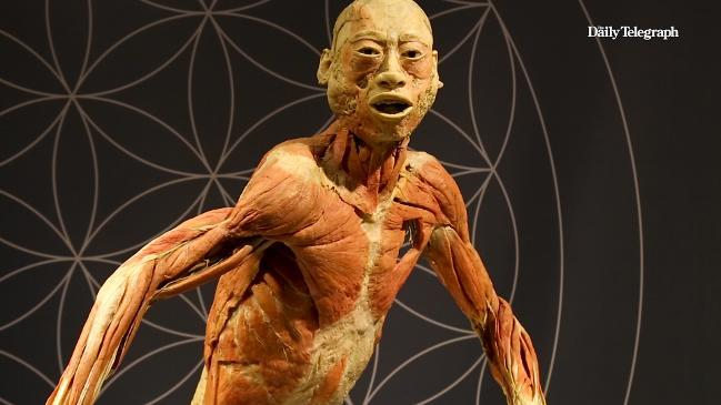 Real Bodies The Exhibition In Sydney