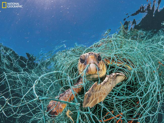 Plastic in our oceans has become a major threat to wildlife. Picture: Jordi Chias/National Geographic