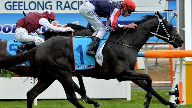 Steven Arnold guides Gamblin' Guru to victory in last year's Geelong Classic. Picture: Jay Town