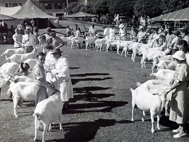 The Royal Easter Show goat judging in the 1950s. Picture: Country Life