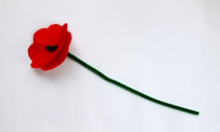 Make a red poppy kidspot make a red poppy mightylinksfo