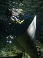 Australian Free Diver Ally Alegra swims alongside a newborn Dolphin calf and it's mother. Picture: Erez Beatus