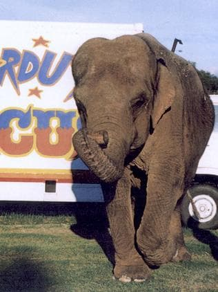 "Arna the elephant was a circus animal until she trampled a handler to death and was retired to Dubbo zoo. She died ""of a broken heart"" a few years later."