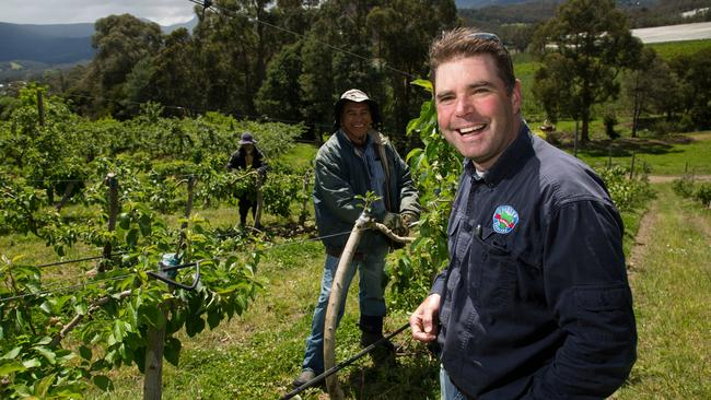 Tasmanian orchardist Howard Hansen with workers. Picture: Peter Mathew