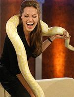 "<p>Actress Angelina Jolie holds a snake during German TV program 'Bet It...?!' (""Wetten Das...?!"") in Germany, 2004.</p>"