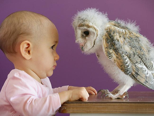 WHAT A HOOT: Charlotte Jordan eyeballs her new best friend, a baby barn owl at Beerwah. Pic Jamie Hanson