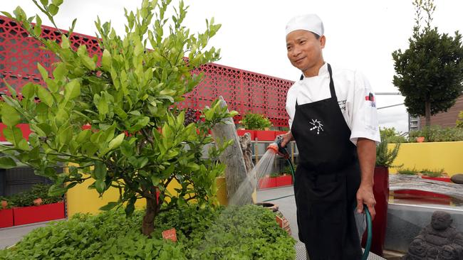 Sous chef Van Nguyen waters for the rooftop herb garden at Fairfield RSL Club. Picture: John Fotiadis.