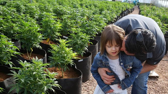 Charlotte's Web ... Matt Figi hugs and tickles his once severely-ill seven-year-old daughter Charlotte, as they wander around inside a greenhouse for a special strain of medical marijuana.