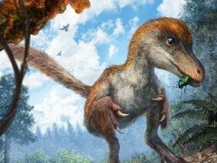 Preserved feathered dinosaur tail has been discovered. Picture: