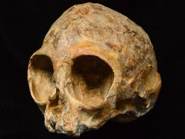 "This picture received from the Leakey Foundation via the Nature website on August 9, 2017 shows an infant ape cranium named as ""Alesi"", excavated from the site of an archaeological dig at Napudet, west of Lake Turkana in Kenya. Picture: AFP"