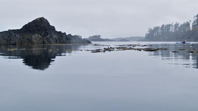 Sean Smyrichinsky was diving off the rugged British Columbia coast close to the Haida Gwaii islands. Dale Simonson / Flickr