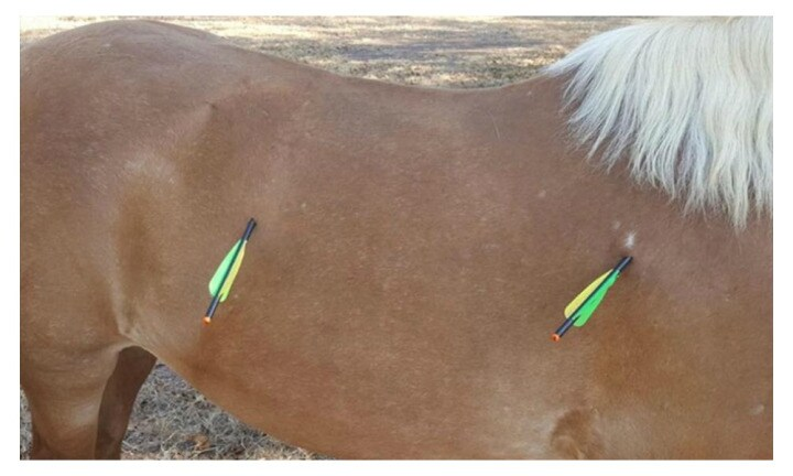 Disgust as much-loved children's pony fatally attacked by arrows in Darwin