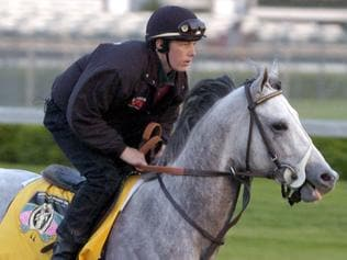 APRIL 29, 2004 : Racehorse Tapit, Kentucky Derby hopeful ridden by exercise rider Joe Ferriday during early morning trackwork at Churchill Downs racetrack in Louisville, Kentucky, 29/04/04. Turf / Training