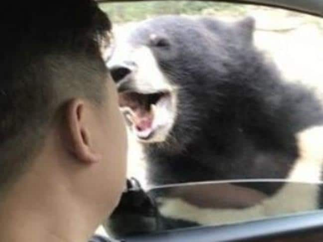 Man biten by bear at Chinese wildlife park. Picture: Weibo