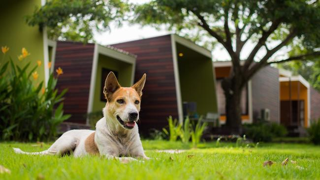 Dog Proof Backyard Ideas : How to dogproof your garden design  The CourierMail