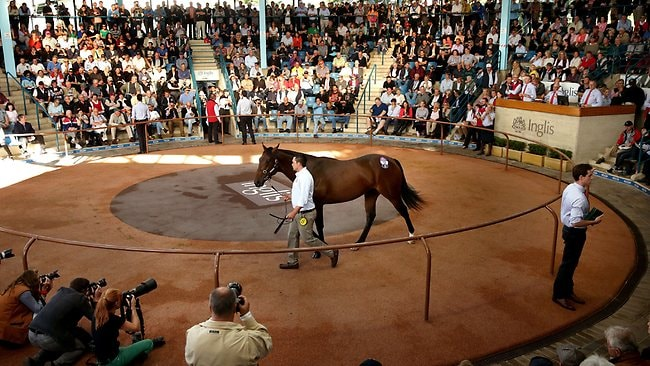 Redoute's Choice-Helsinge colt which sold for $5 Million dollars . Picture: Gregg Porteous