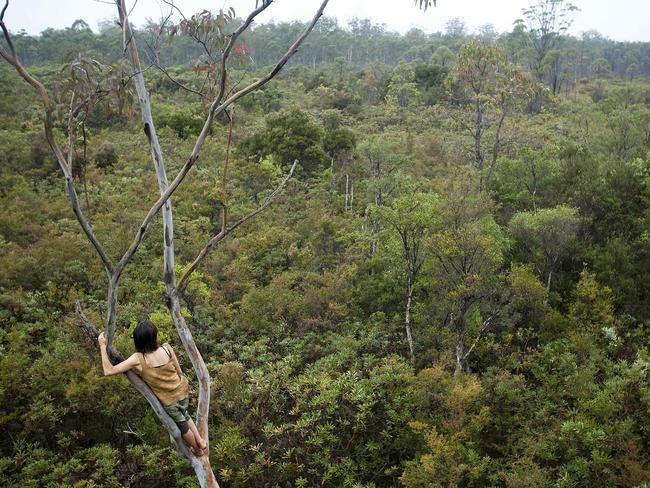 A short hike from home, the Sunrise Tree provides an elevated view of the Banksia heath around Claire Dunn's camp. Picture: Australian Geographic