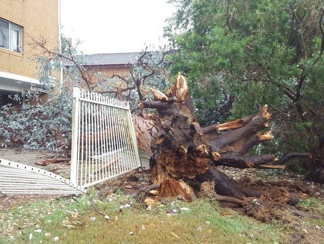 Strong winds felled a tree in Kingswood / Picture: TWITTER @9NewsSyd