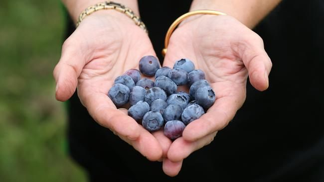 Blueberries contain loads of antioxidants, which are good for the brain. Picture: Andy Rogers.