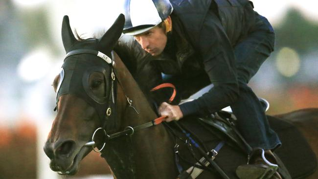 Winx will begin pre-training this week as she builds up for another spring campaign. Picture: Mark Evans