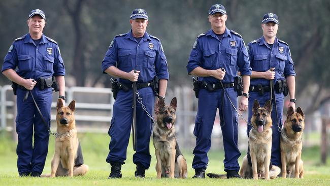 Police dog 'Ink' with Senior Constable Tony Potter (left). Pictured with Senior Constable Bryan Whitehorn with 'Ike', Sergeant Darryn Conroy with 'Ice' and Senior Constable Neil Stevenson with 'Iggy' at the Thebarton police barracks. Picture: Matt Turner.