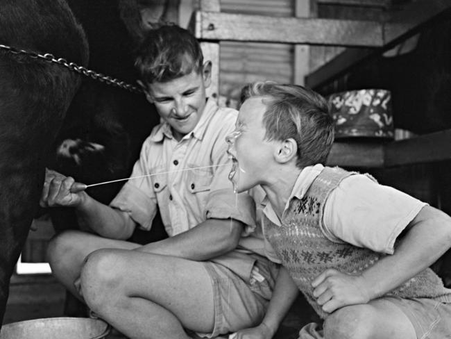 """Despite working and living on a dairy farm, children at Fairbridge Farm where kept starving, witnessed told the UK inquiry into sexual abuse. Picture: From """"On their Own — Britain's Child Migrants"""" an Australian National Maritime Museum"""