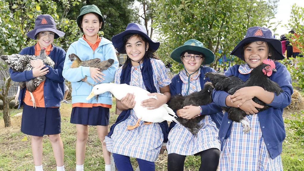 Wooranna Park Primary School nabs sustainability award for programs ...