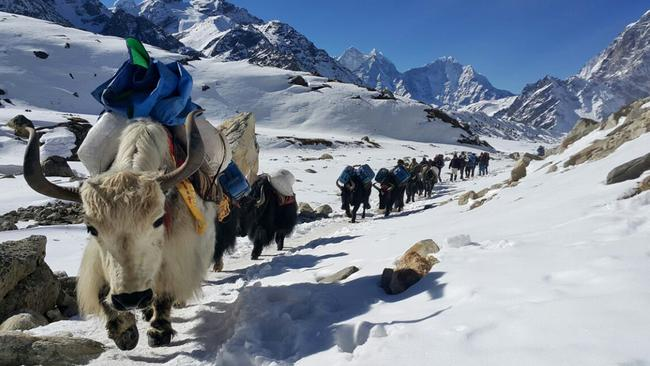 Avalanches don't discriminate. Won't somebody, please, think of the yaks? Picture: AP Photo/Tashi Sherpa, file