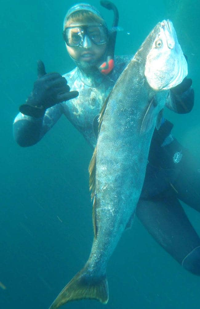 Diving with a San Clemente yellow tail fish.