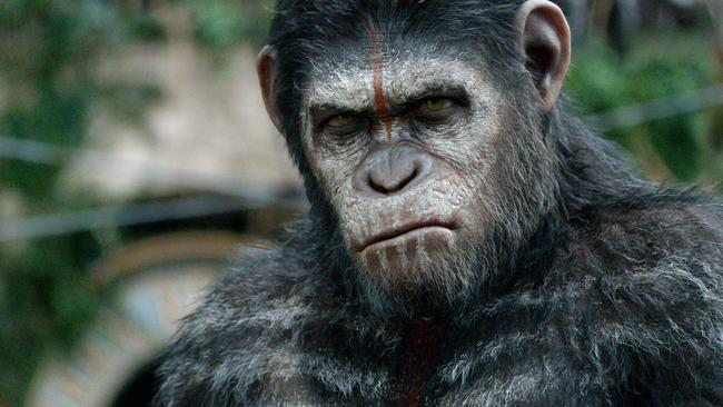 Caesar the ape ... in a scene from film Dawn of the Planet of the Apes.