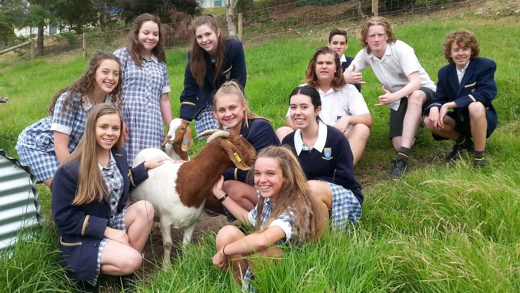 Mount Lilydale Mercy College Young Farmers Club Displays